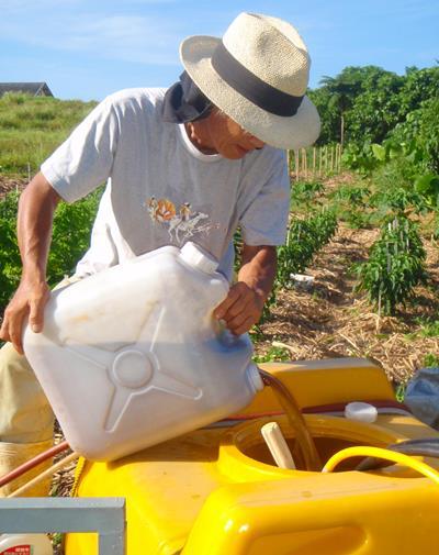 西表島ミトレア農園・有機栽培